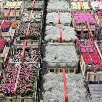 """Pasaulio gėlės """"Didmeninė prekyba"""""""